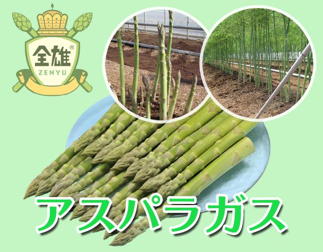 栽培 アスパラ ガス アスパラガスの「採りっきり栽培」とは?