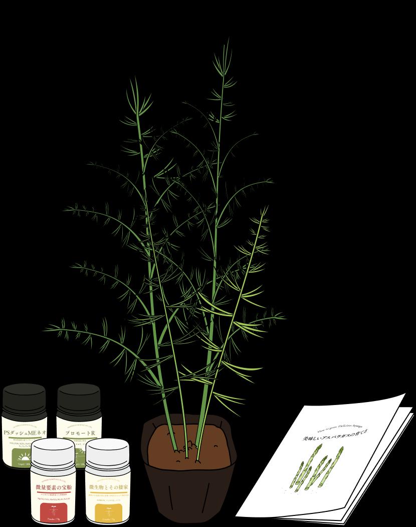 アスパラの苗と肥料4種