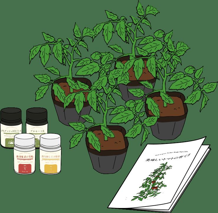 トマトの苗と肥料4種
